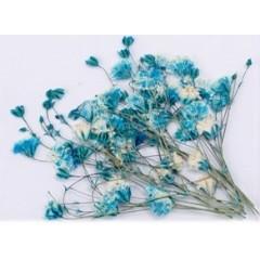 Flores secas para decoración.